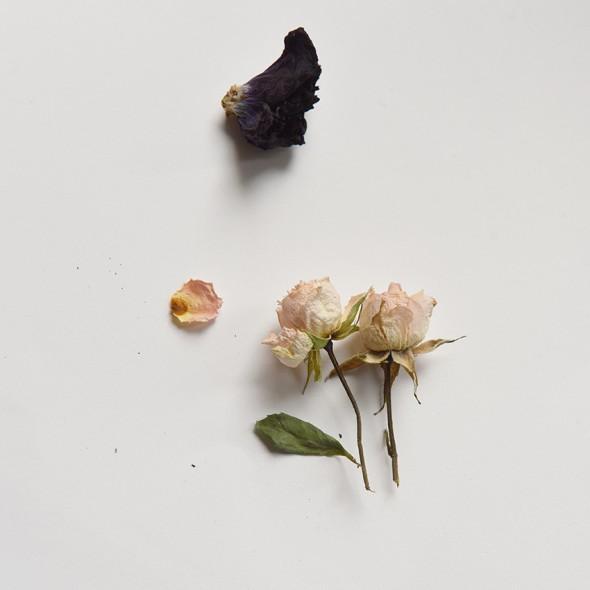rosen_7591